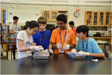 Summer Program - Anatomy | Boston Leadership Institute: Anatomy Summer Program (1 Week)