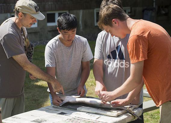 Summer Program - Marine Biology | Acadia Institute: Advanced Marine Science Camp Program