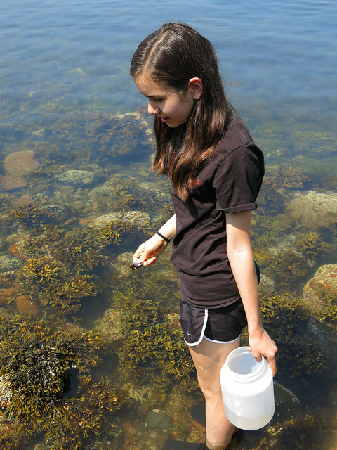 Summer Program - Marine Biology | Acadia Institute: Advanced Marine Science Camp Program