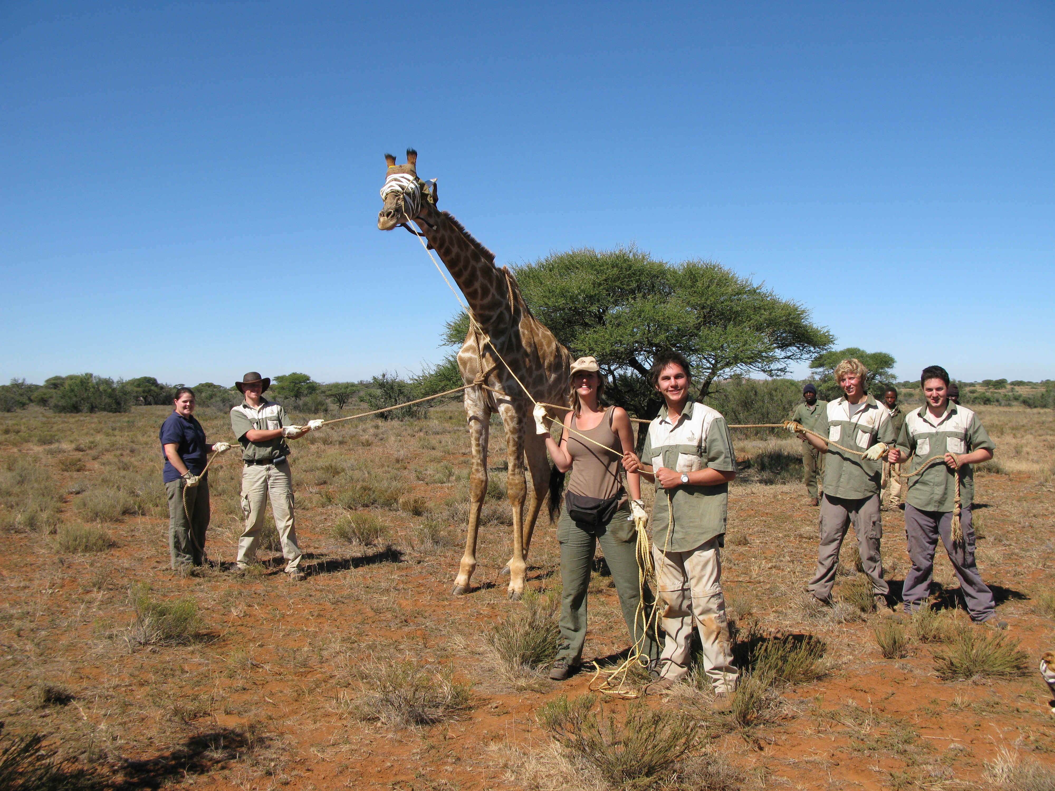 Gap Year Program - African Conservation Experience  4