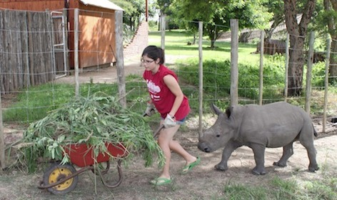 Gap Year Program - African Conservation Experience  1