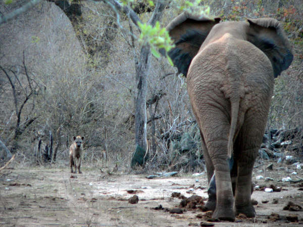 Gap Year Program - African Conservation Experience  2