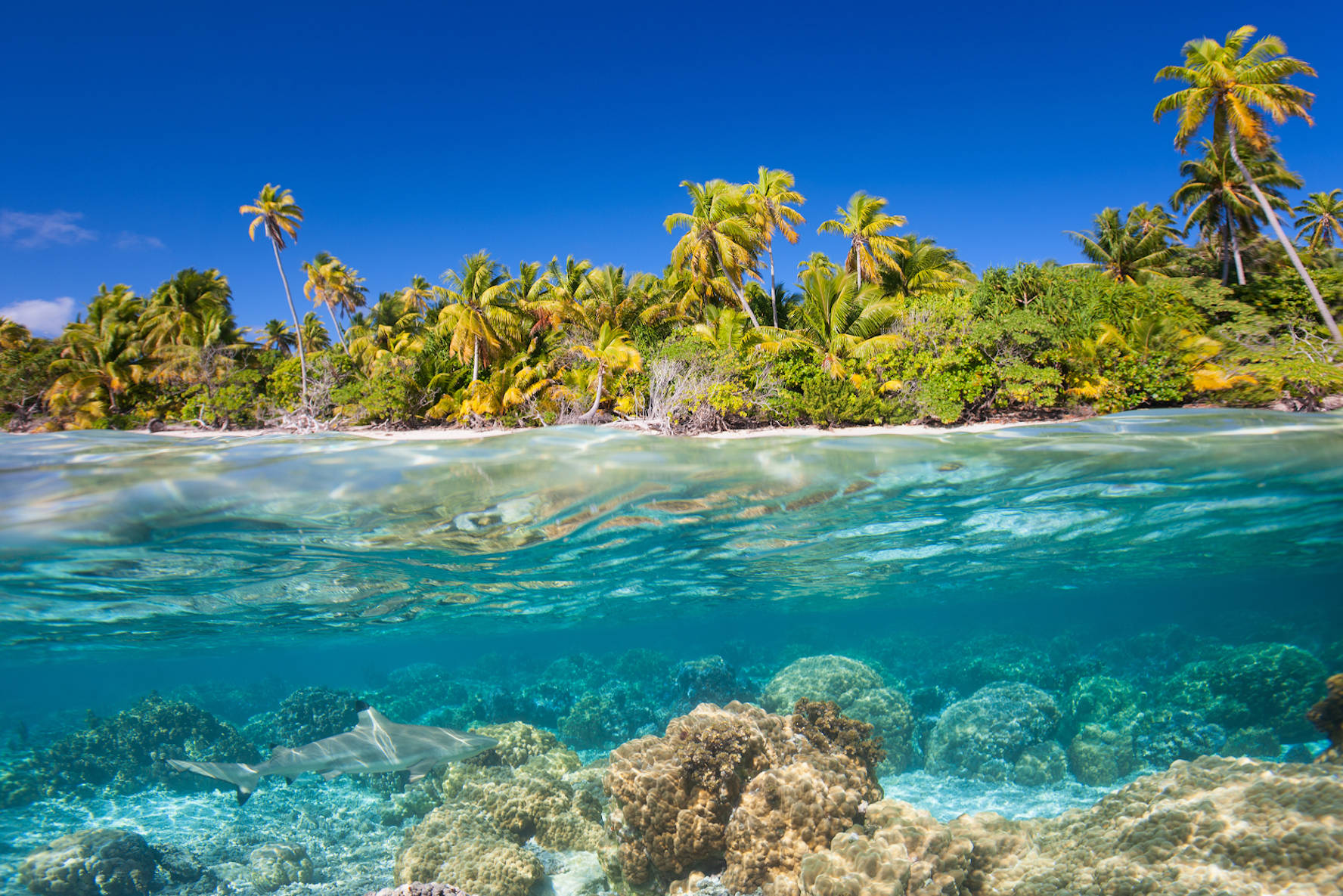 Gap Year Program - ARCC Gap   Hawaii: O'ahu, Kauai & the Big Island  4