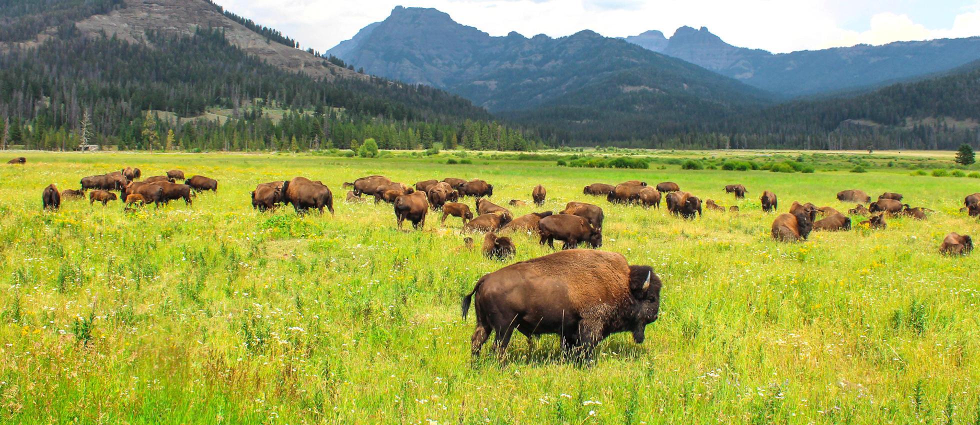 Gap Year Program - ARCC Gap   Northwest: Wyoming, Montana, Idaho, Washington & Hawaii  6