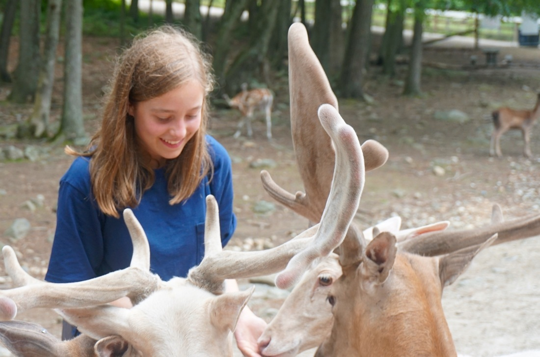 Summer Program - Biology | Boston Leadership Institute: Veterinary Medicine Summer Program