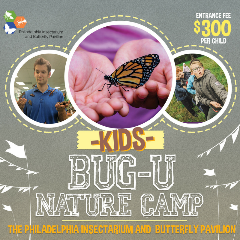 BugU Summer Camp @ the Philly Insectarium & Butterfly Pavilion