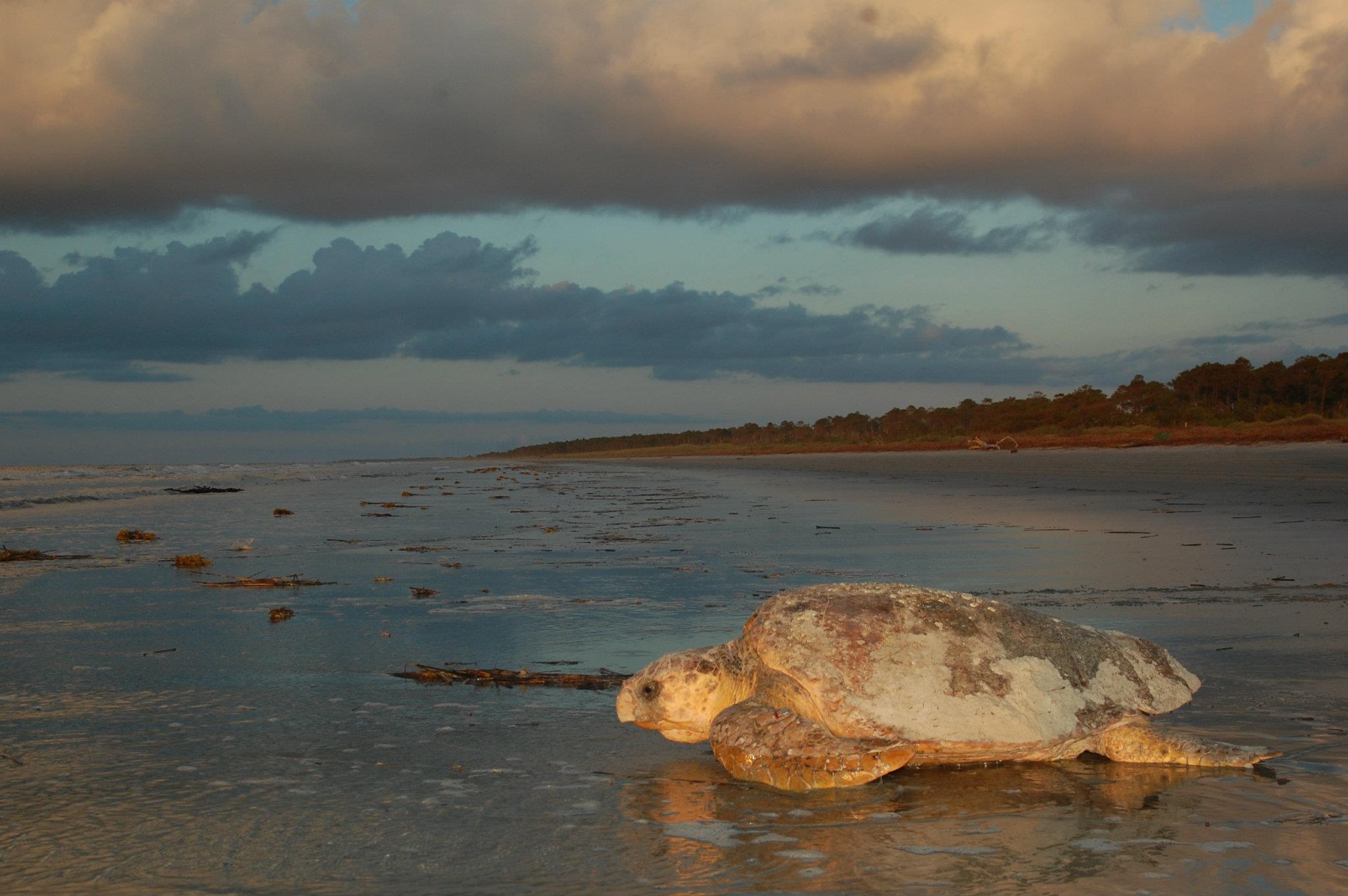 Summer Program - Marine Biology | Caretta Research Project