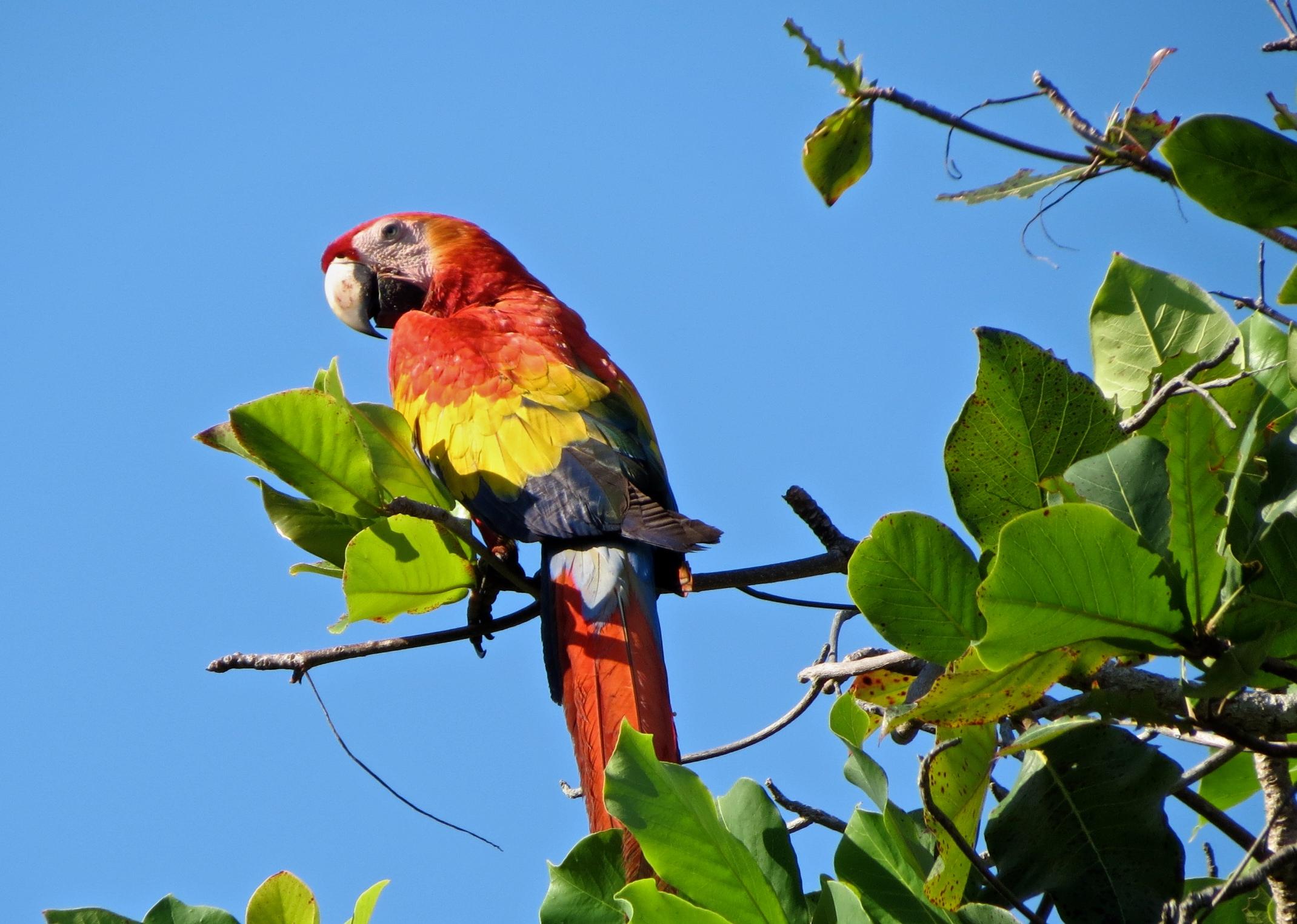 Summer Program - Wildlife Conservation | CIEE High School Summer Abroad: Tropical Biodiversity Conservation in Monteverde, Costa Rica