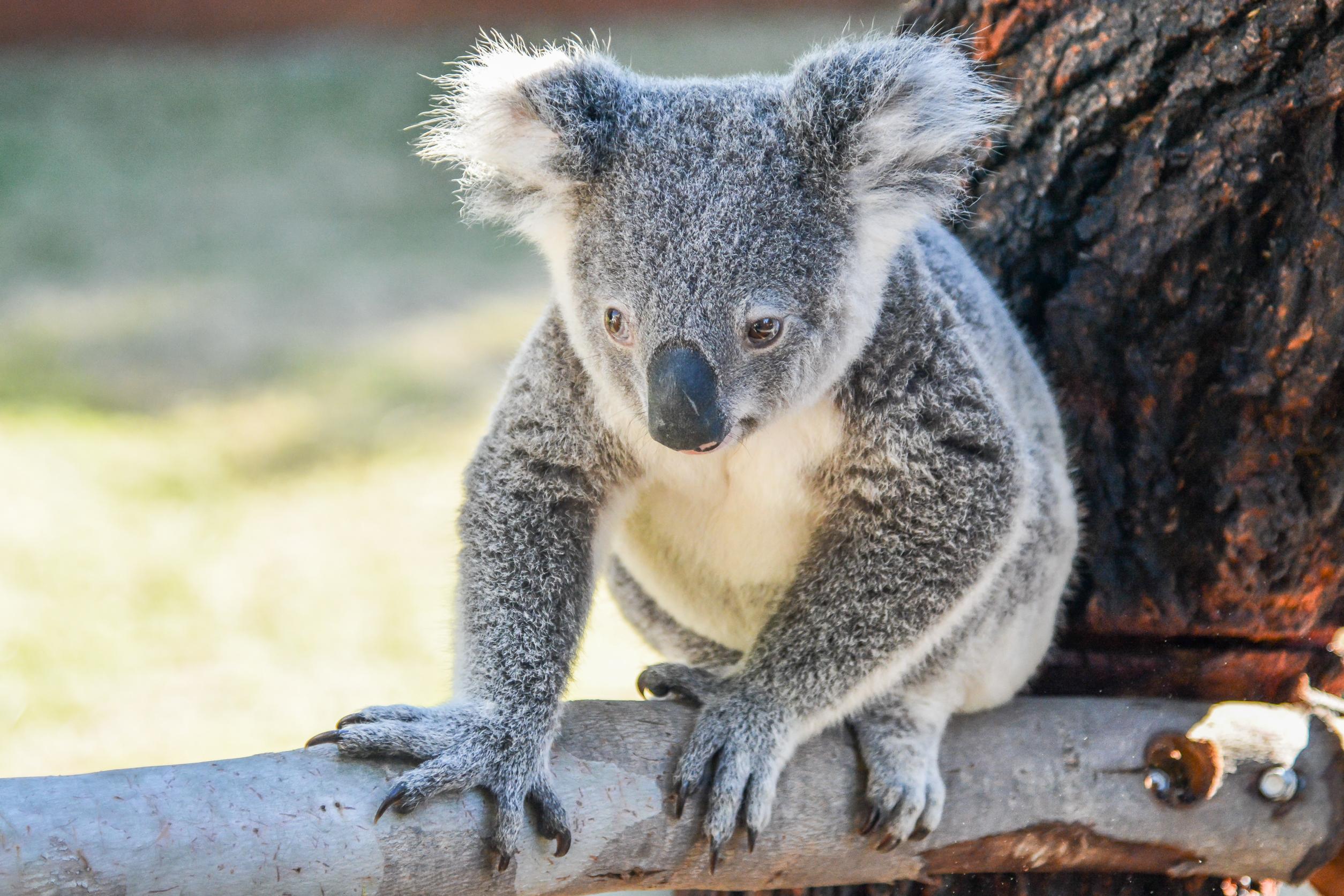Summer Program - Wildlife Conservation   CIEE High School Summer Abroad: Australian Wildlife Conservation in Perth, Australia