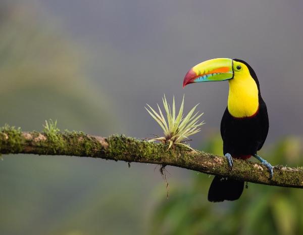 Gap Year Program - Pacific Discovery: Costa Rica Mini Semester Program  2