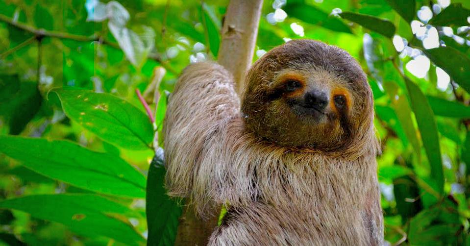 Summer Program - Wildlife Conservation   Outward Bound Costa Rica