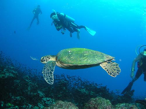Summer Program - Marine Biology   Outward Bound Costa Rica