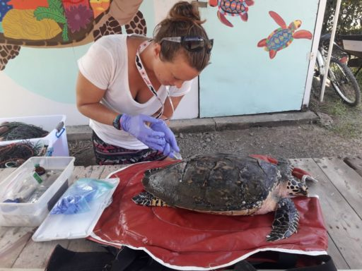 Summer Program - Study Abroad | Loop Abroad: Costa Rica Sea Turtle Conservation and Research