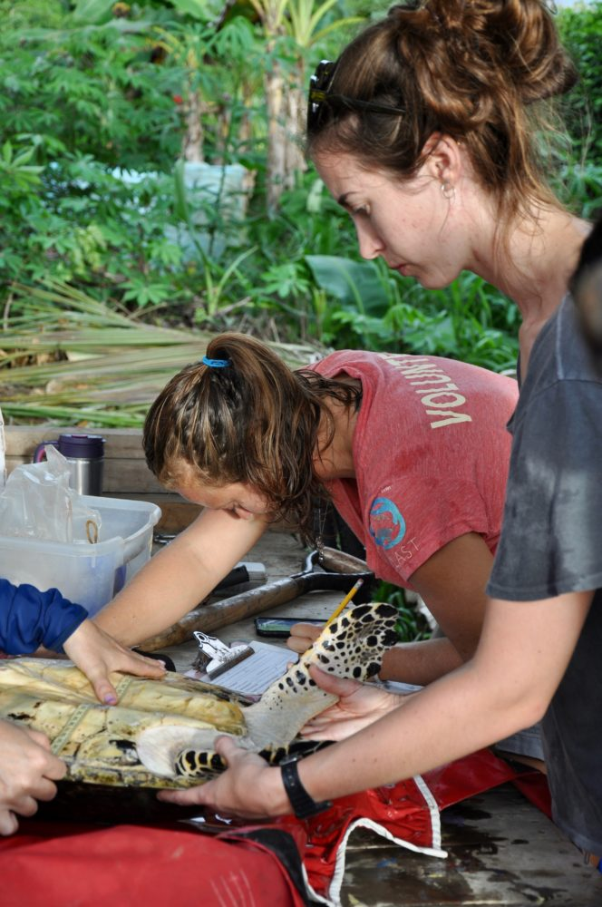 Loop Abroad: Costa Rica Sea Turtle Conservation and Research