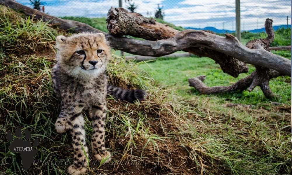 Creative Wildlife Media Programs in South Africa
