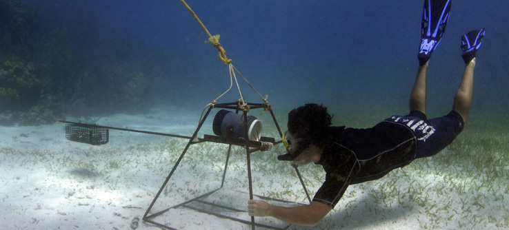Earthwatch Institute: Shark Conservation in Belize