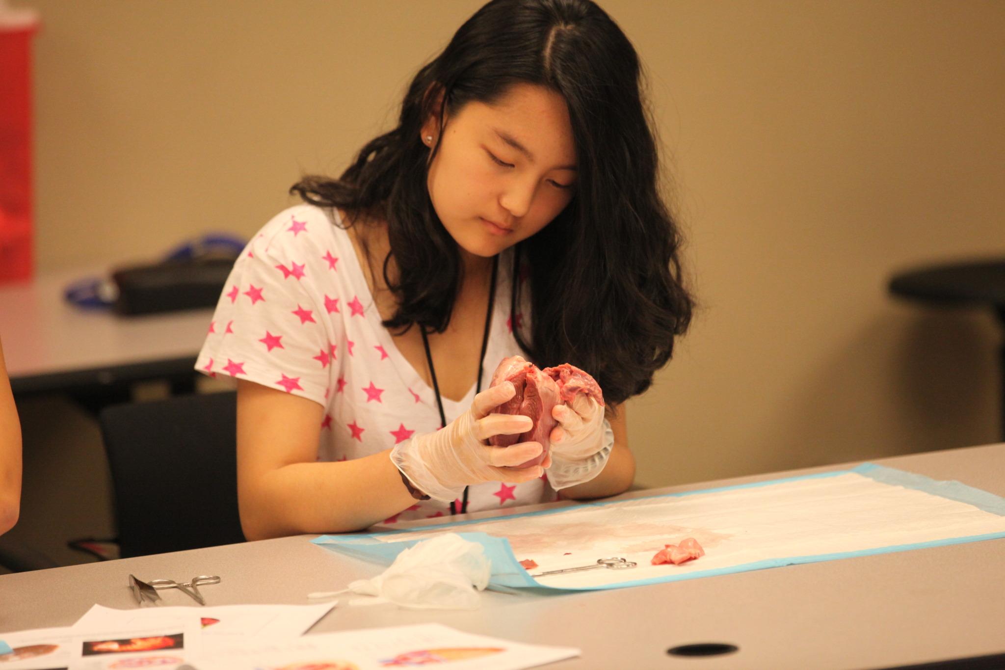 Summer Program - Anatomy | Emory University Summer Pre-College Program: Pre-Health and Science