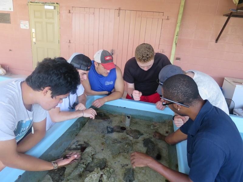 SeaTrek BVI: FATHOMS Science Voyages
