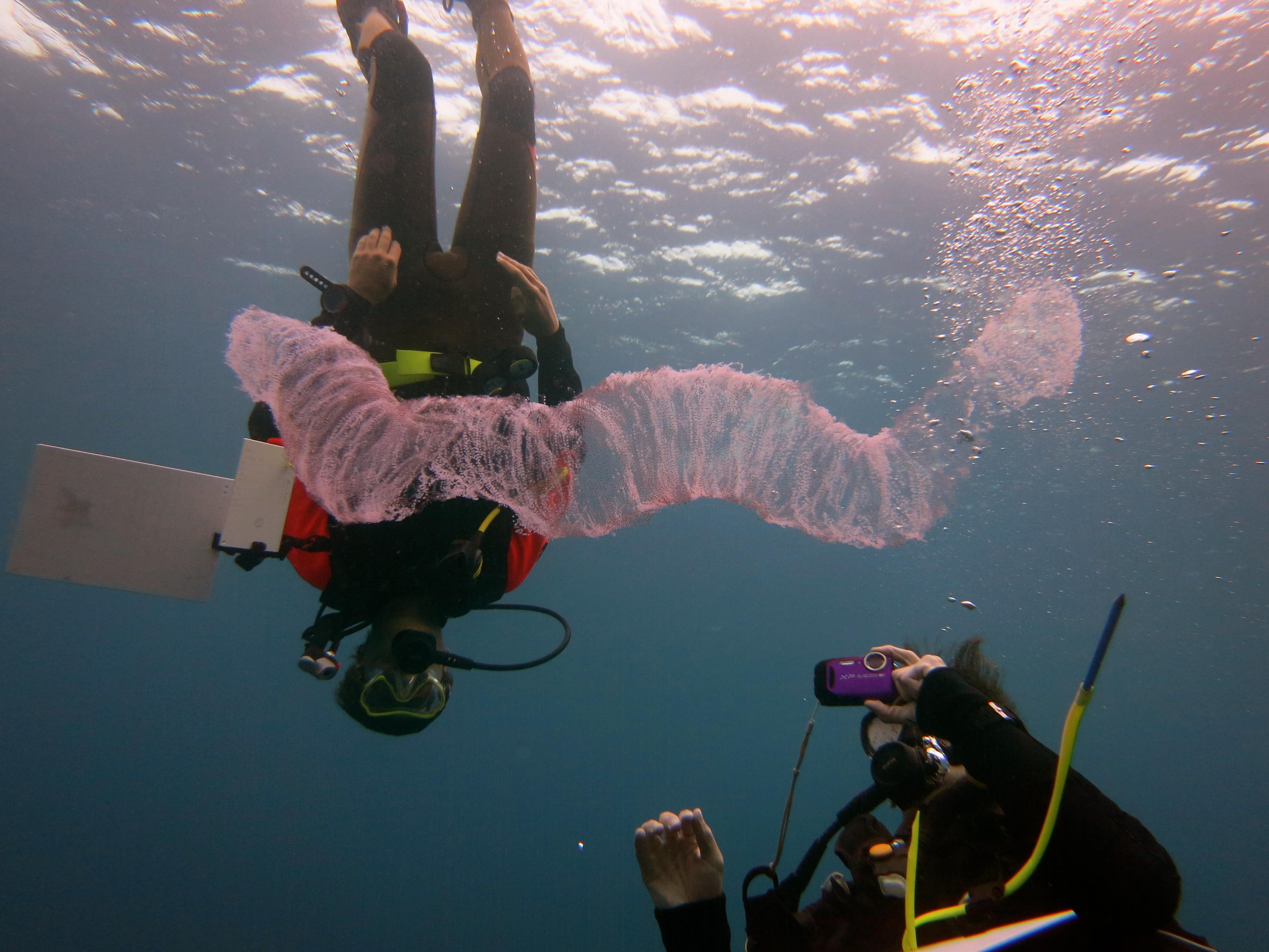Gapforce: Dive Instructor Training – Costa Rica