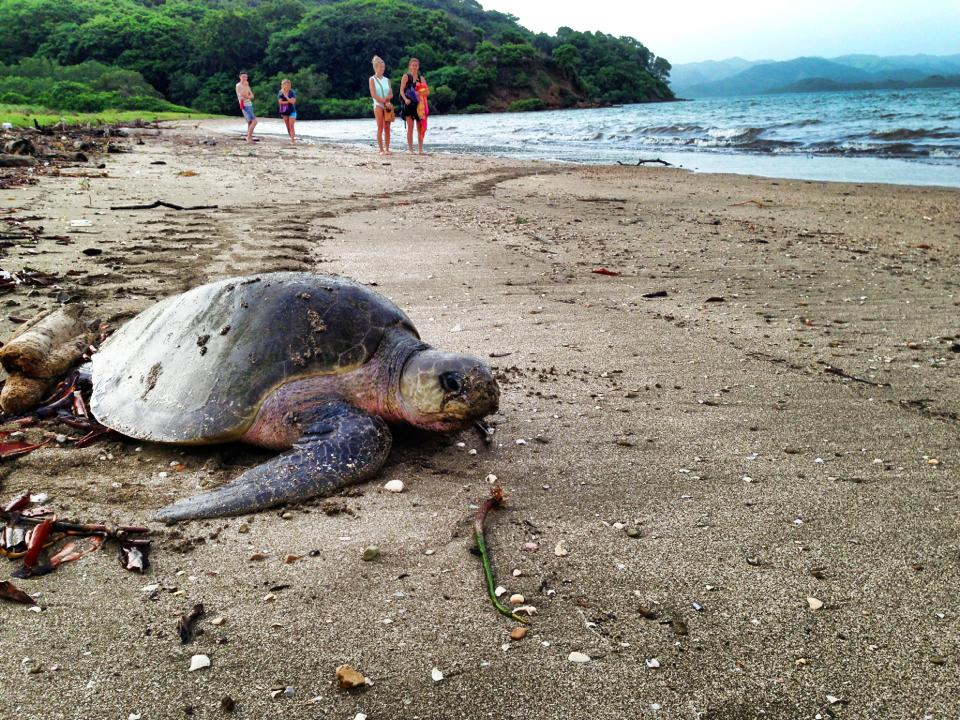 Summer Program - Travel And Tourism | Global Leadership Adventures: Costa Rica - Protecting the Pacific