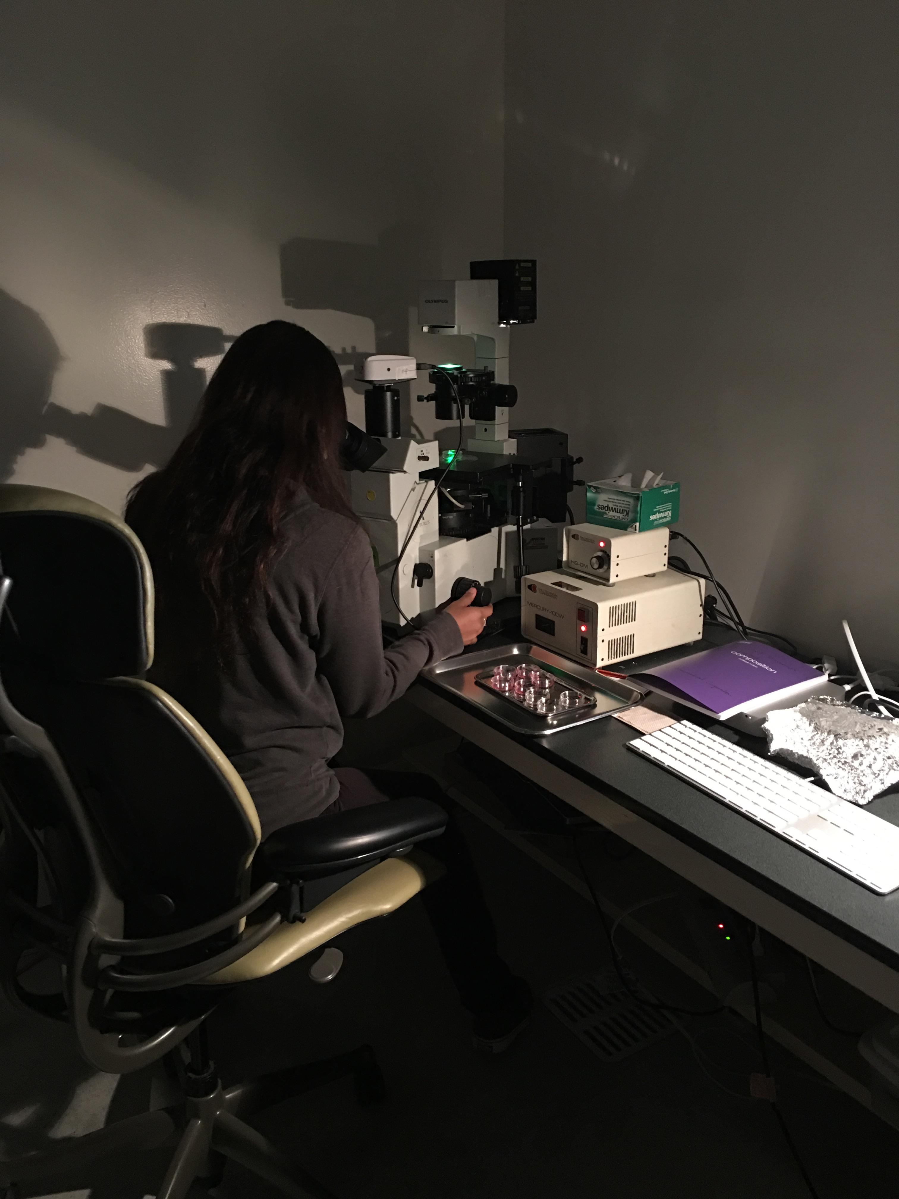 Summer Program - Veterinary Medicine | Intro to Stem Cell Systems