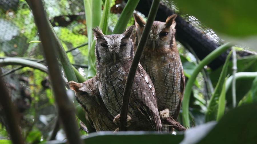 Gap Year Program - Kaya Gap Year: Wildlife Conservation in Ecuador Fall 2021  2