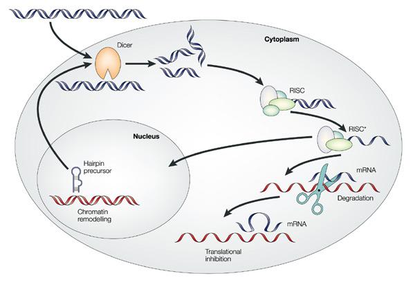 Summer Program - STEM | Methods in Stem Cell Engineering