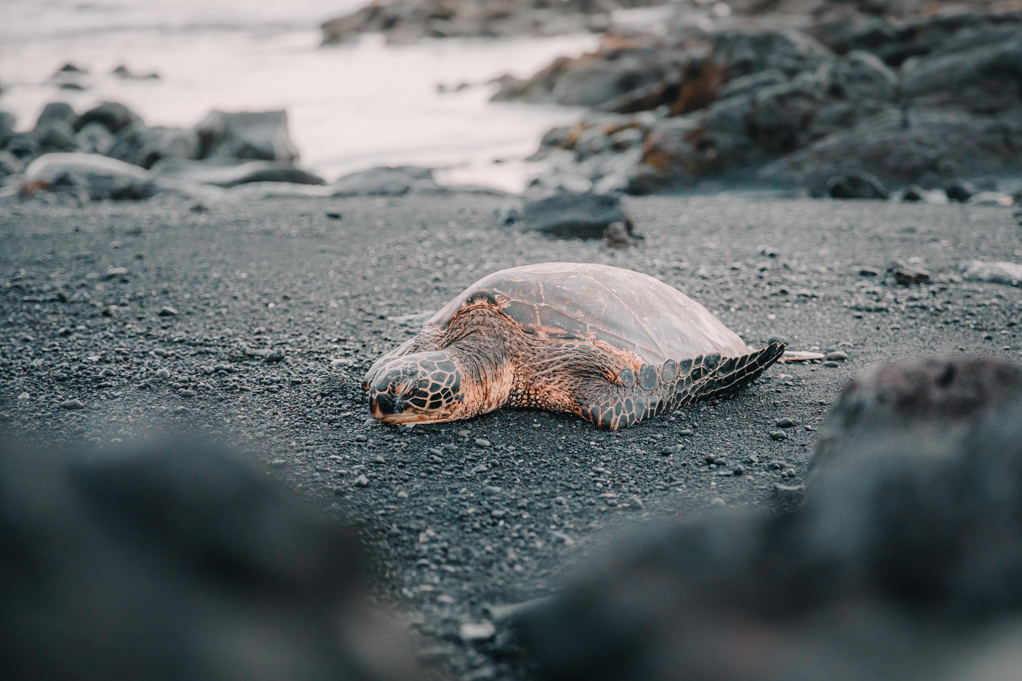 Summer Program - Surfing | Pacific Discovery: Hawaii Mini Semester Program