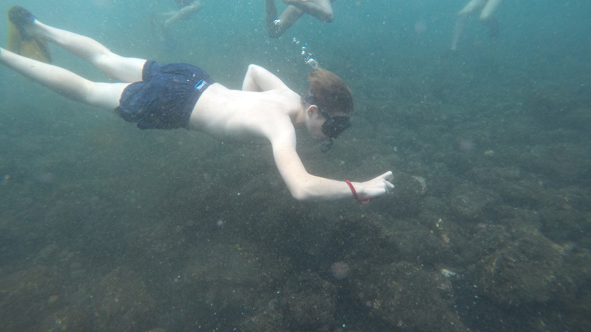 Summer Program - Marine Biology | Science Camps of America: Land and Sea Camp