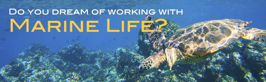 Summer Program - Marine Biology   Science Camps of America - Big Island of Hawaii Summer Camp for Teens