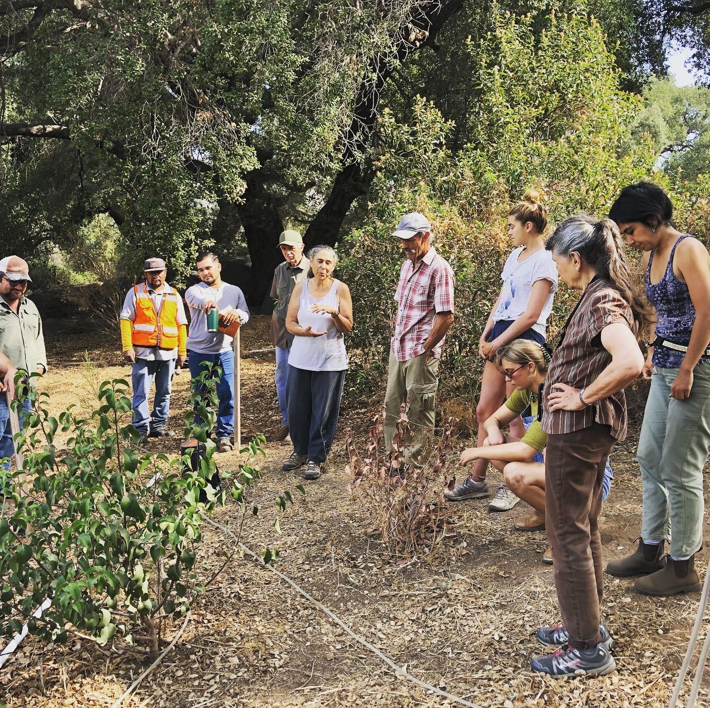 Soil to Table Certification Program at Tres Estrellas Organic Farm and Garden