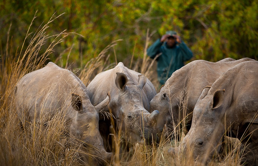 Gap Year Program - Loop Abroad: South Africa Wildlife and Conservation Semester Abroad  3