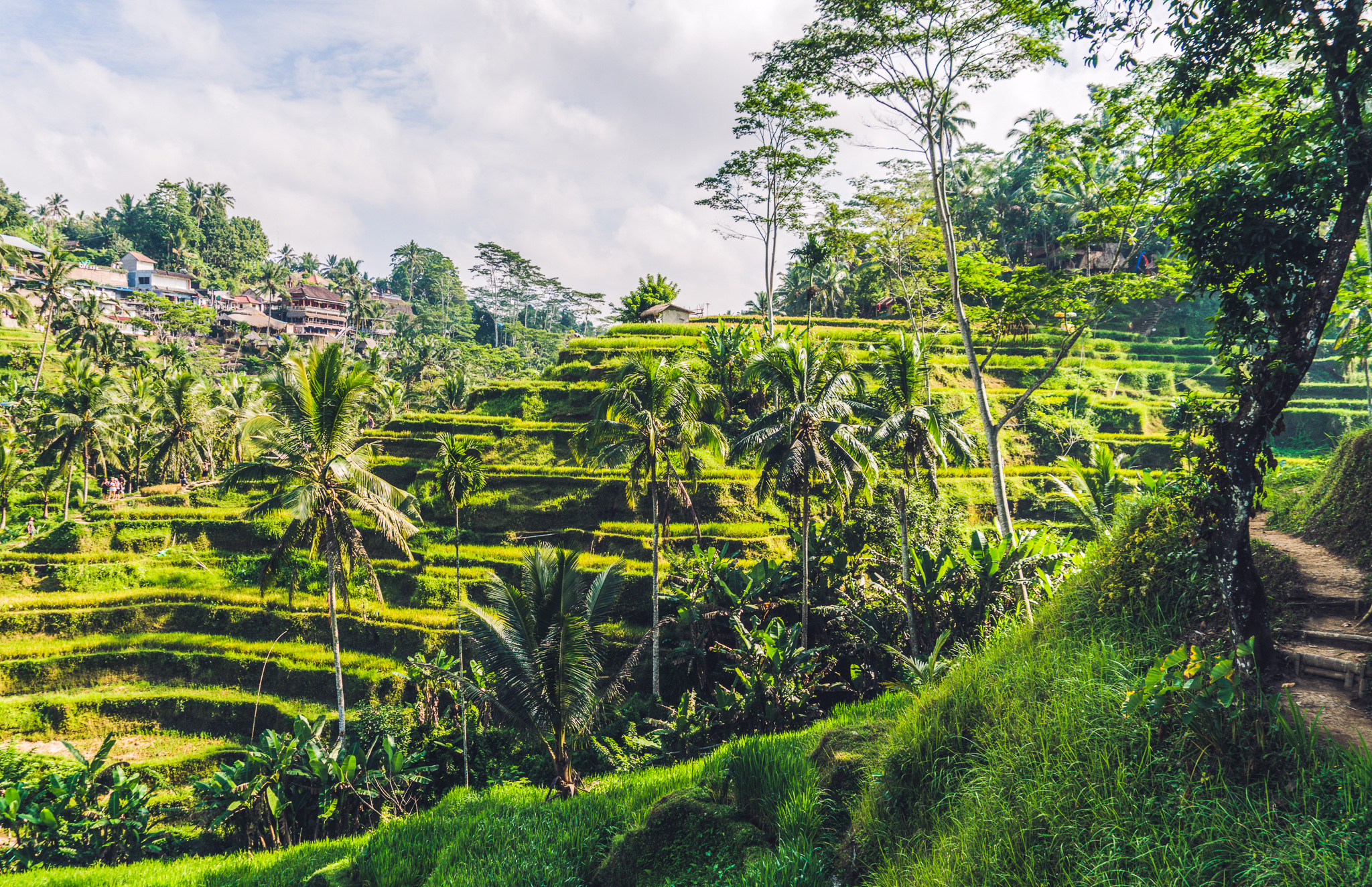 Summer Program - Pre-Med | Travel For Teens: Bali Healthcare Education and Medical Outreach