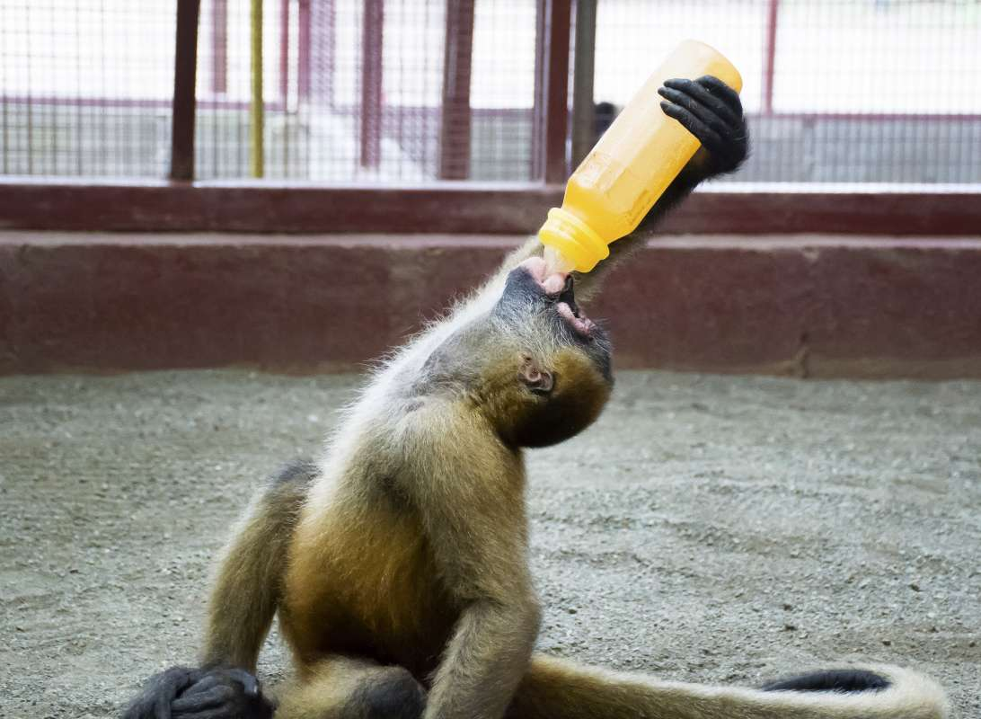 Summer Program - Animal Rights and Rescue   Travel For Teens: Costa Rica Animal Rescue Service