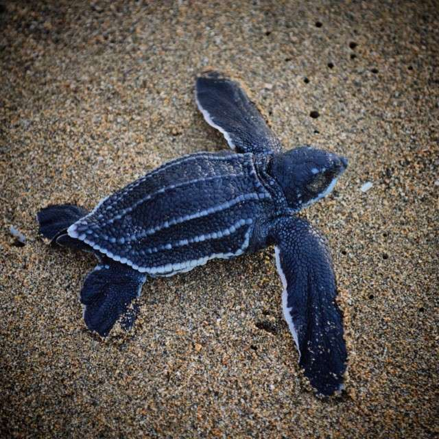 Summer Program - Wildlife Conservation   Travel For Teens: Costa Rica Sea Turtle Service and Adventure