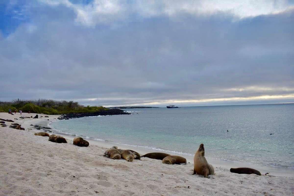 Summer Program - Promoting Volunteerism   Travel For Teens: Ecuador and the Galápagos Service
