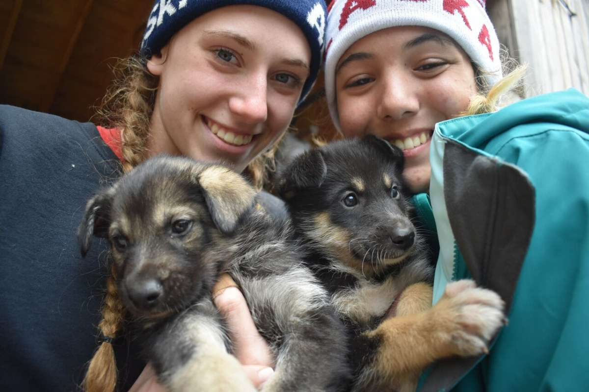 Summer Program - Animal Rights and Rescue | Travel For Teens: Hawaii and Alaska Service