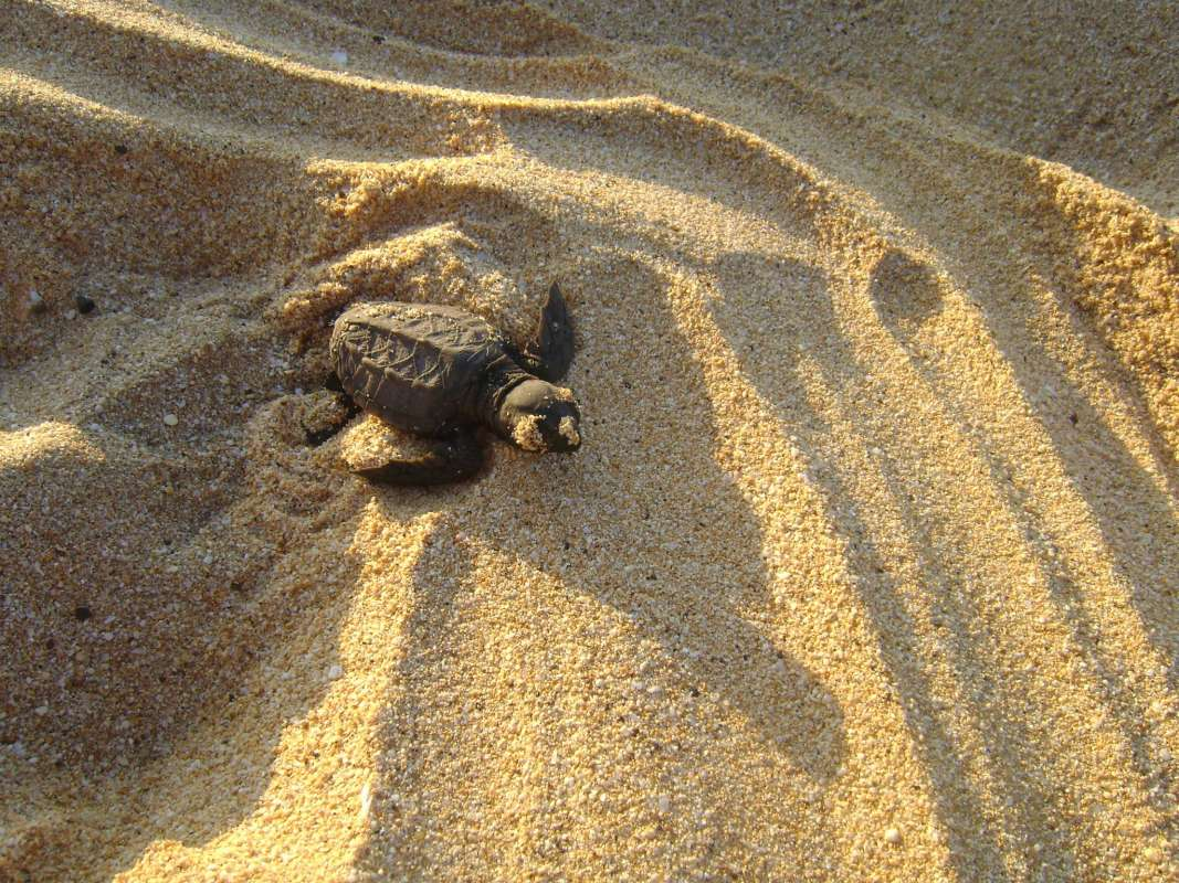 Summer Program - Animal Rights and Rescue | Travel For Teens: Hawaii Sea Turtle Service and Adventure