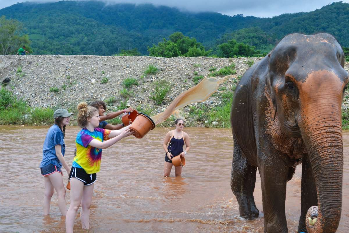Summer Program - Animal Rights and Rescue | Travel For Teens: Thailand Elephant Service and the Islands