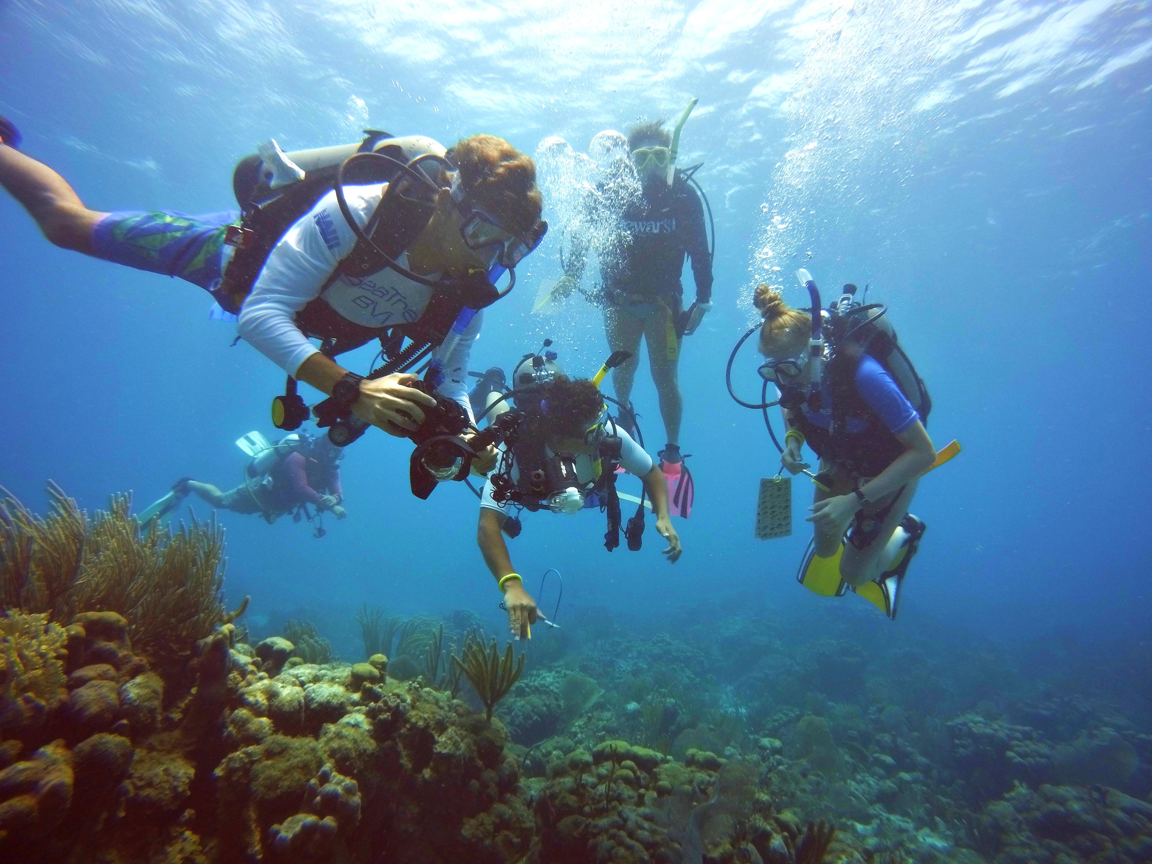 SeaTrek BVI: Trek 2 Advanced & Rescue Diver