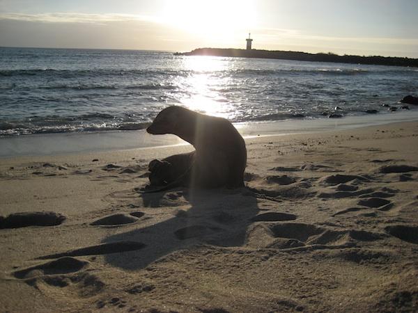 Summer Program - Promoting Volunteerism | VISIONS Galapagos High School Service Program