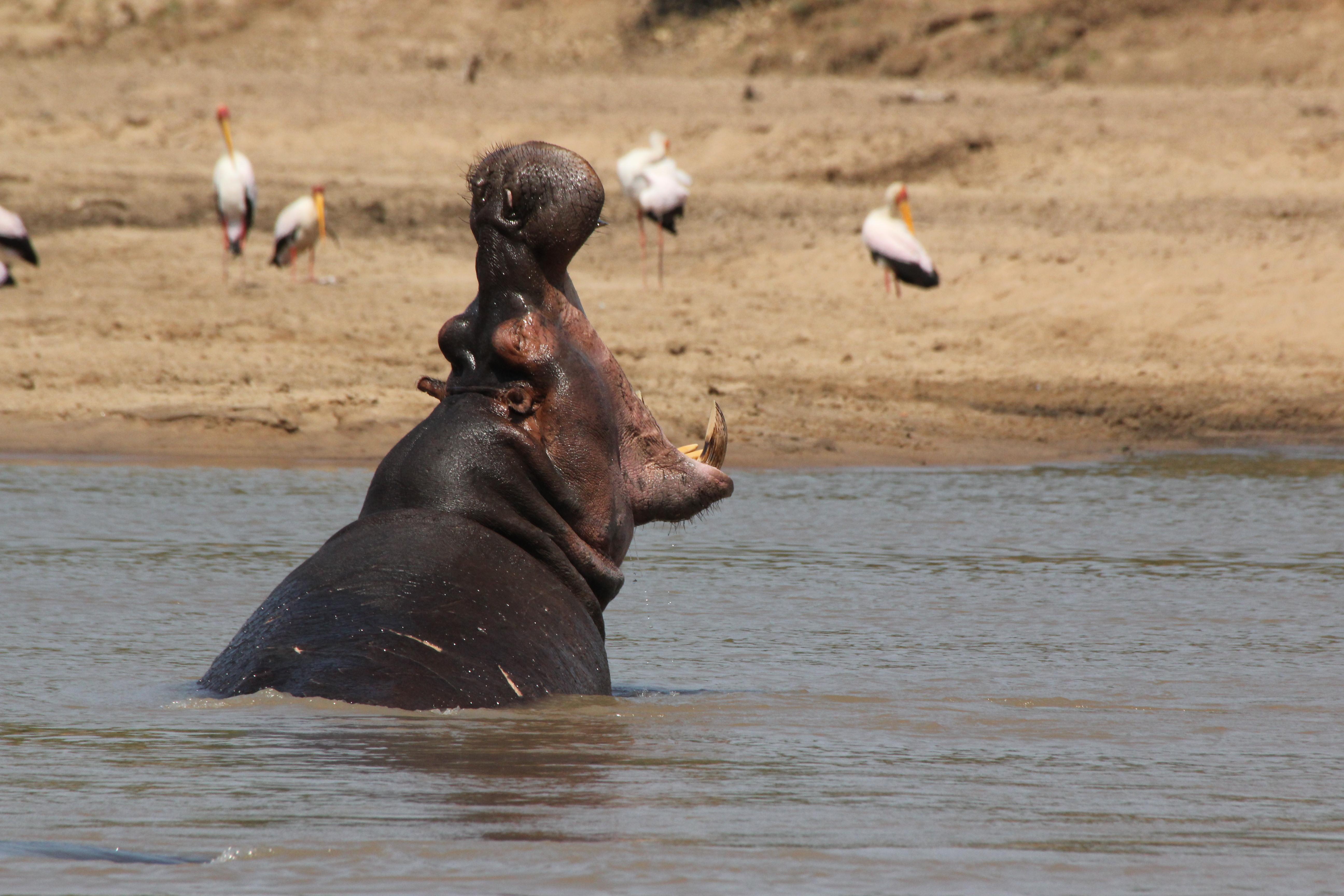 Volunteer and Adventure Program – Lake Malawi – 6 weeks