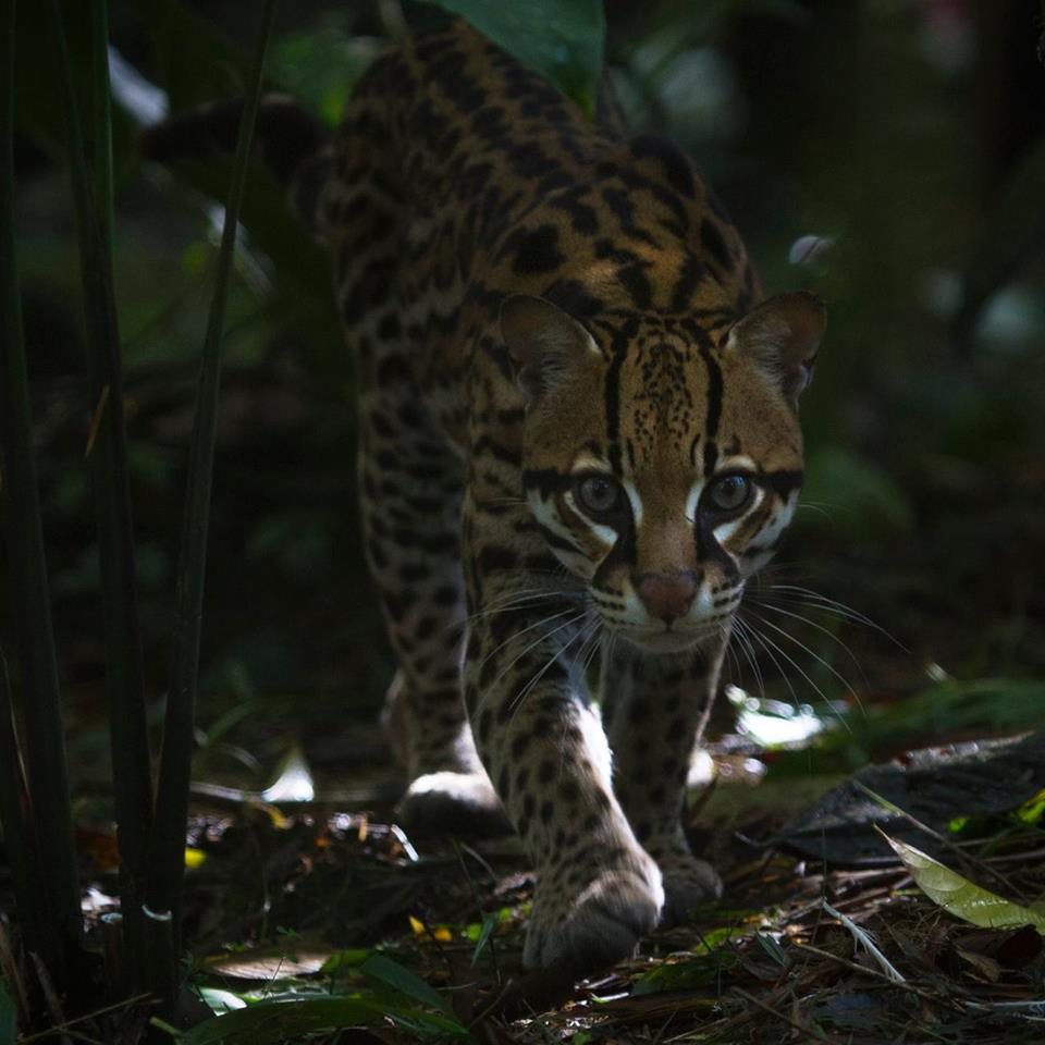 Oyster Worldwide – Wildlife sanctuary volunteering in Ecuador
