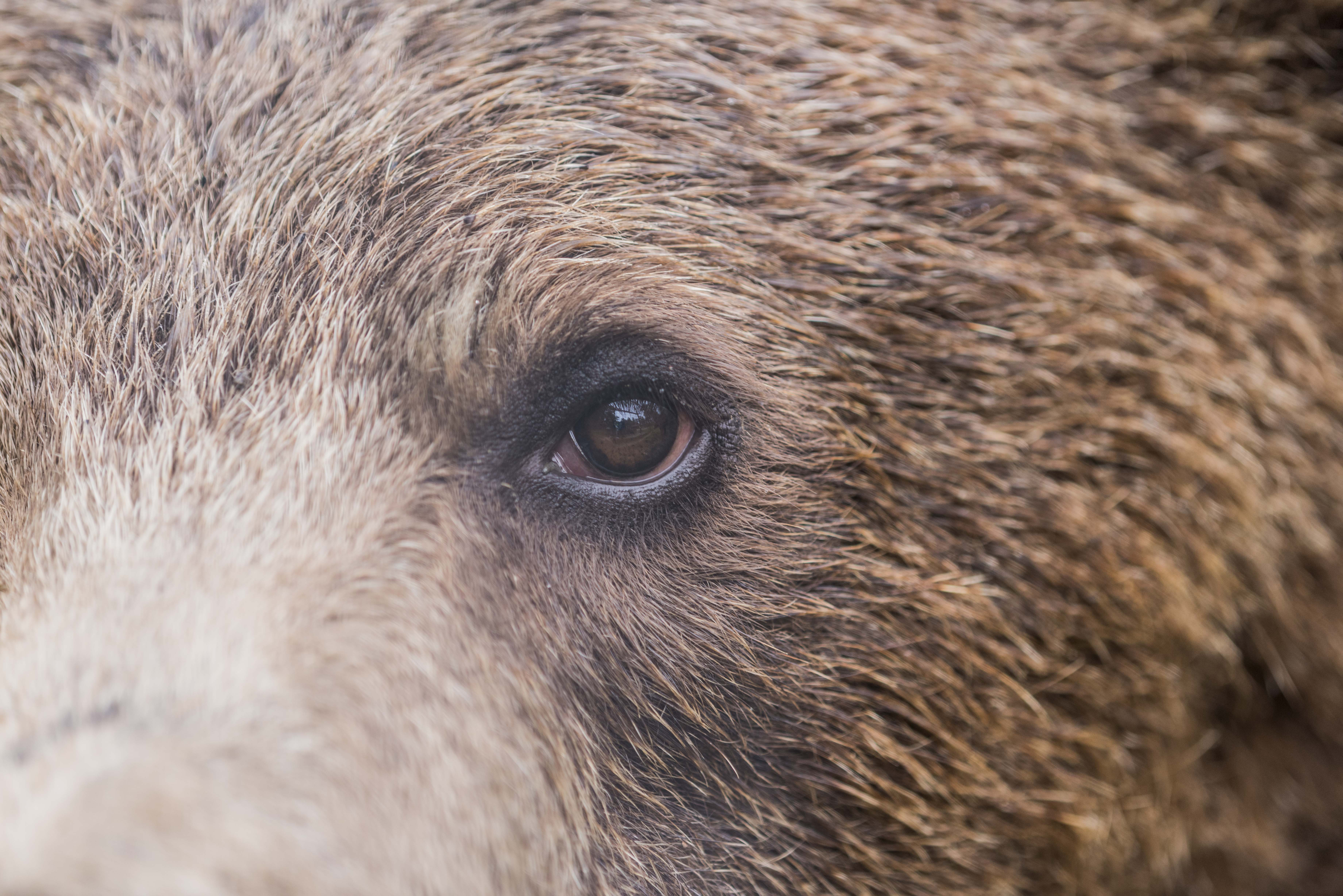 Oyster Worldwide – Volunteer with Bears in Romania