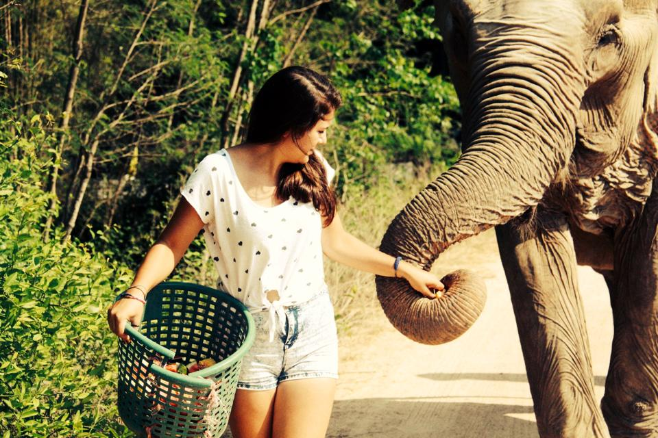 Oyster Worldwide – Volunteer with Elephants in Thailand