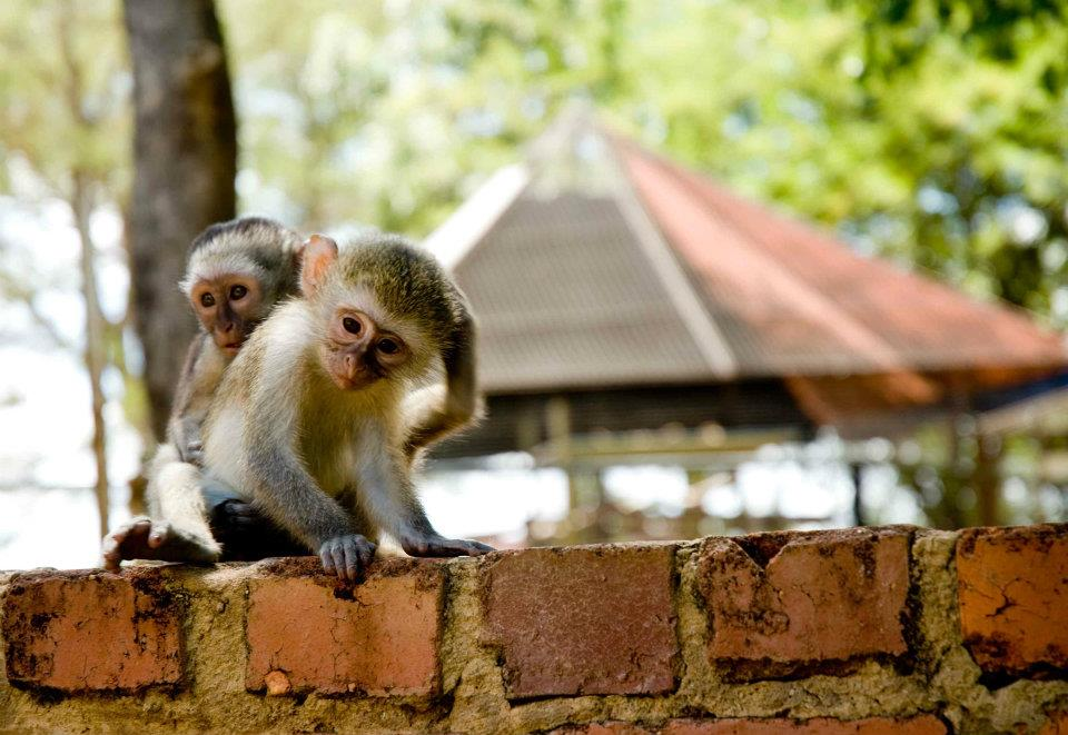 Oyster Worldwide – Volunteer with Monkeys and Baboons in South Africa